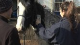 Horse-JPEG-for-web